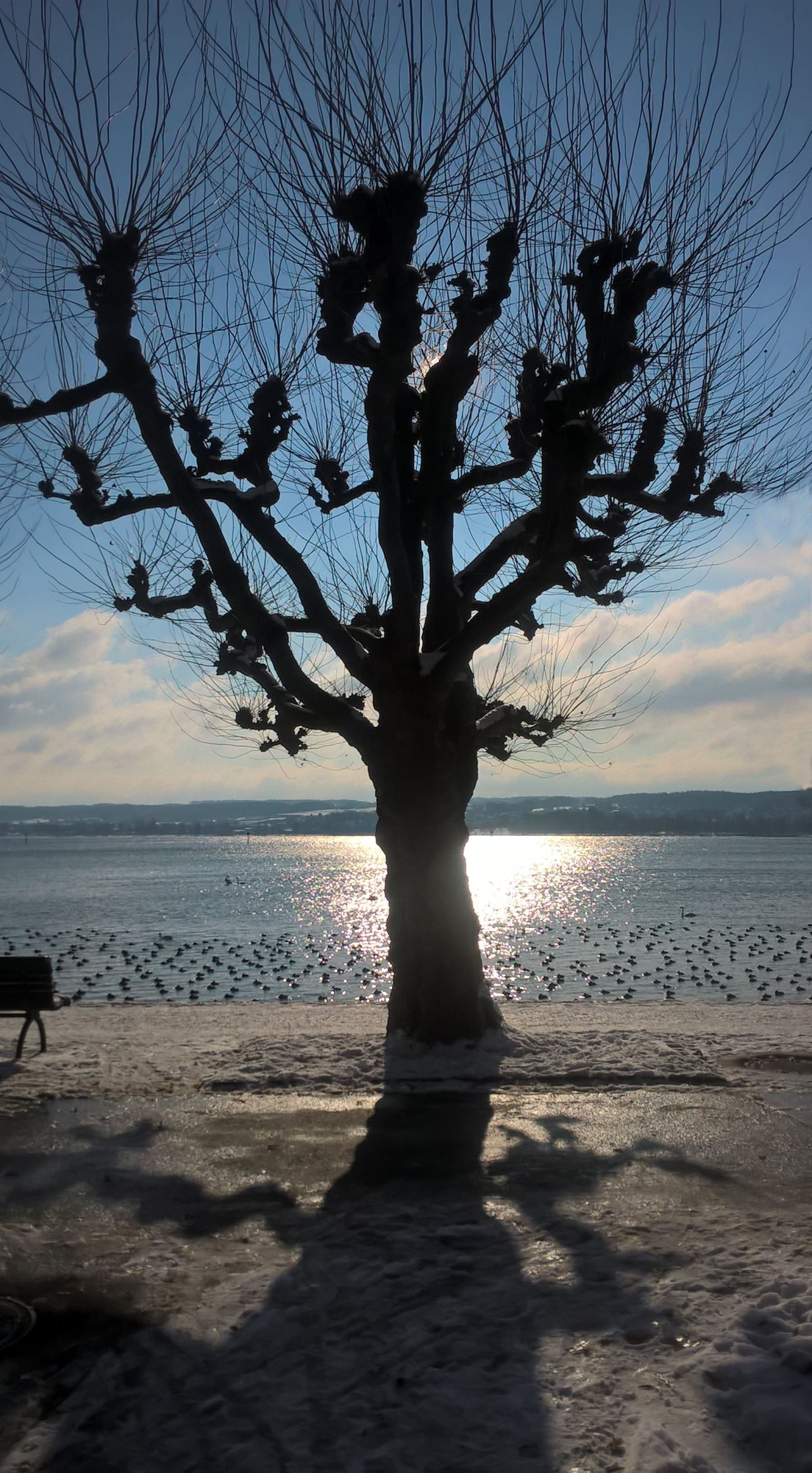 Winter-Platane am See