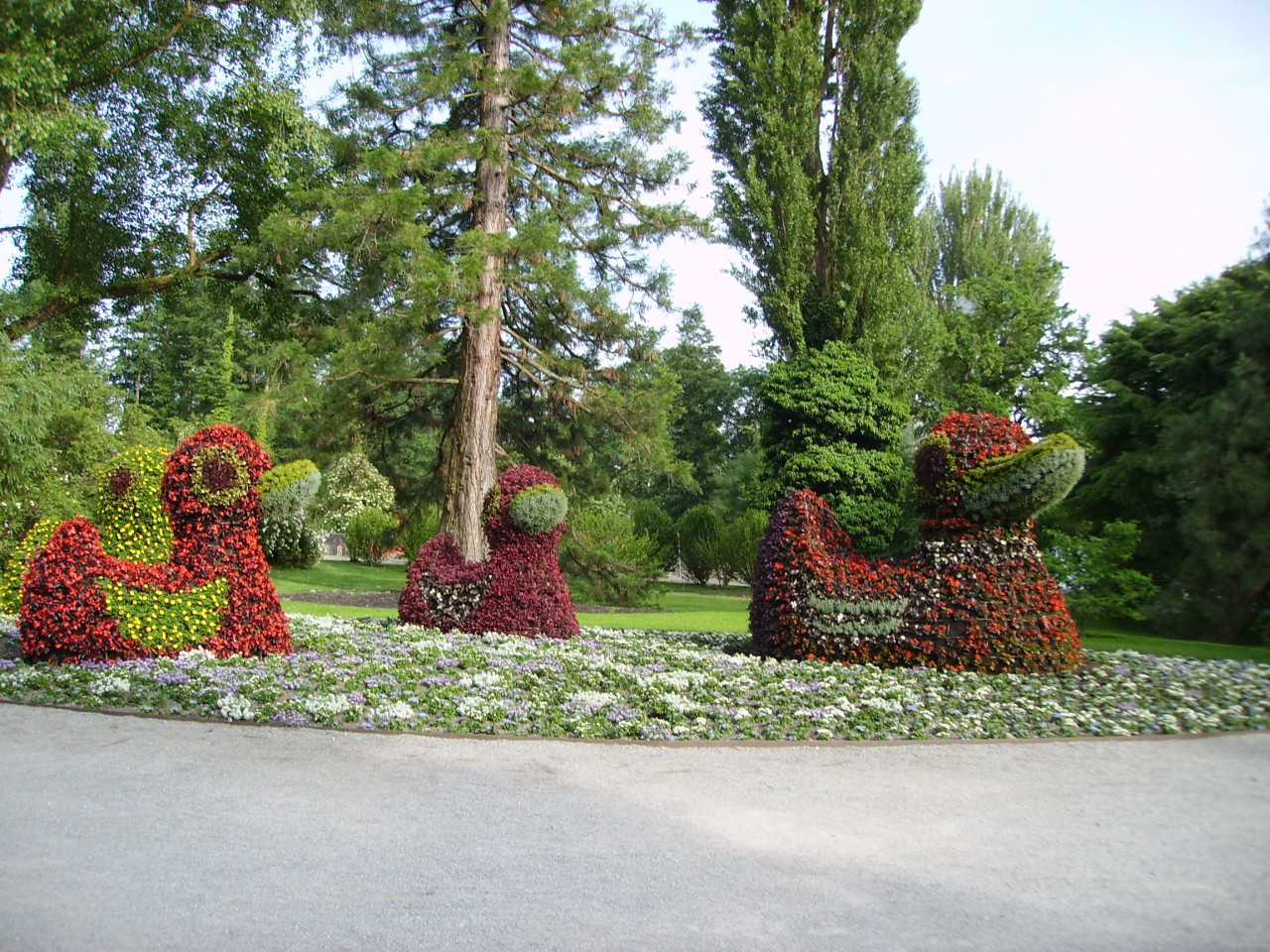 """Flower-ducks"" on the Mainau island"